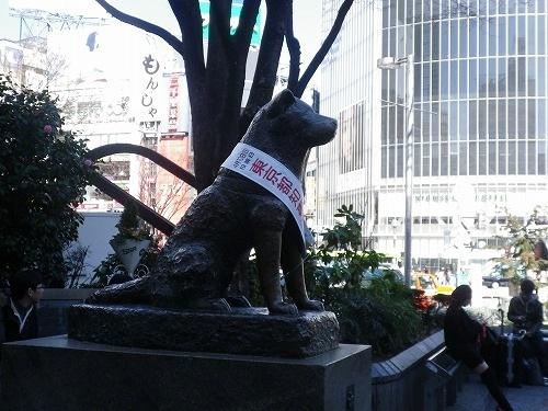 124渋谷のわんこs-IMGP7181.jpg